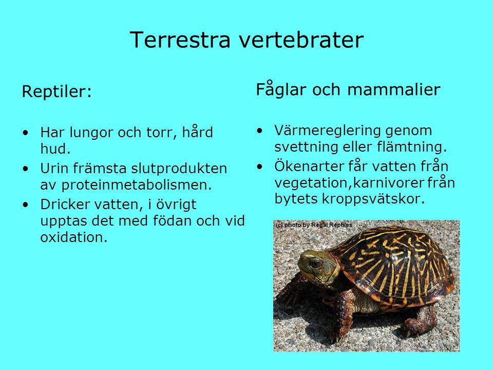 Terrestra vertebrater
