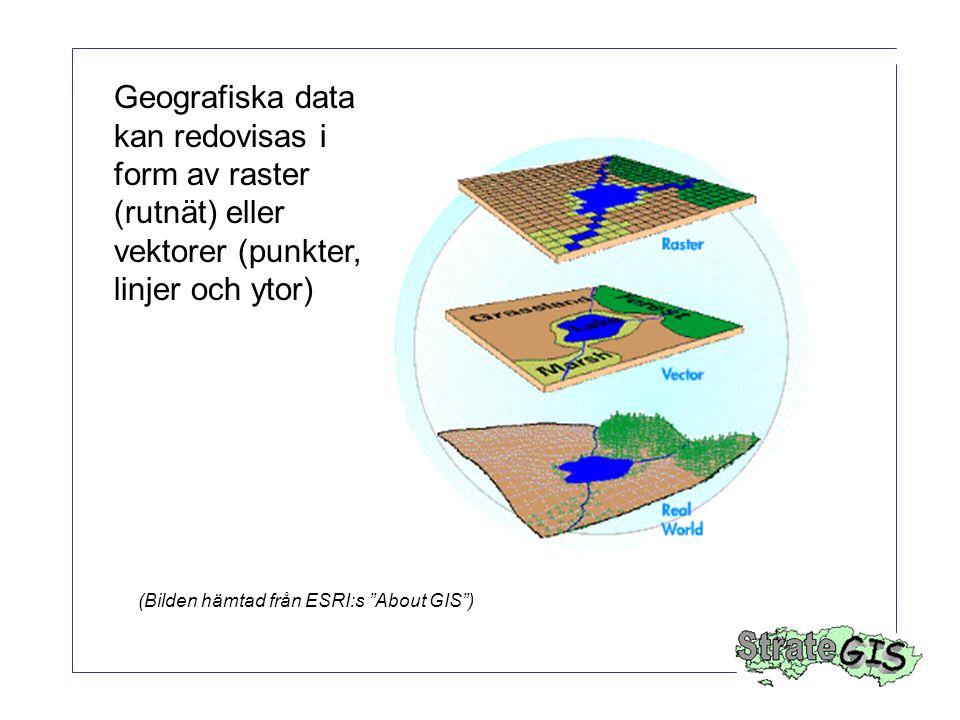 Geografiska data kan redovisas i form av raster (rutnät) eller vektorer (punkter, linjer och ytor)