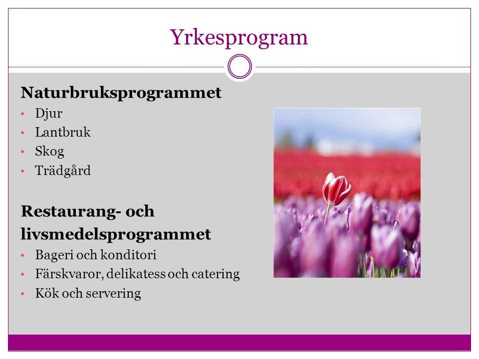 Yrkesprogram Naturbruksprogrammet Restaurang- och livsmedelsprogrammet