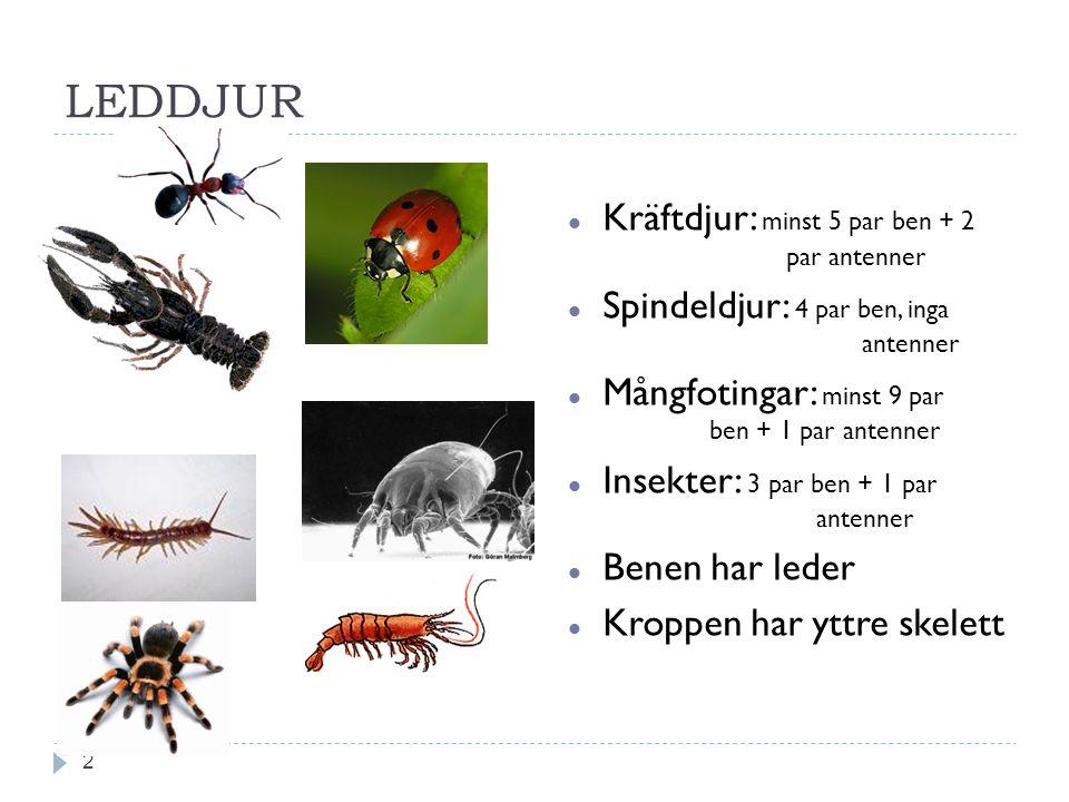 LEDDJUR Kräftdjur: minst 5 par ben + 2 par antenner