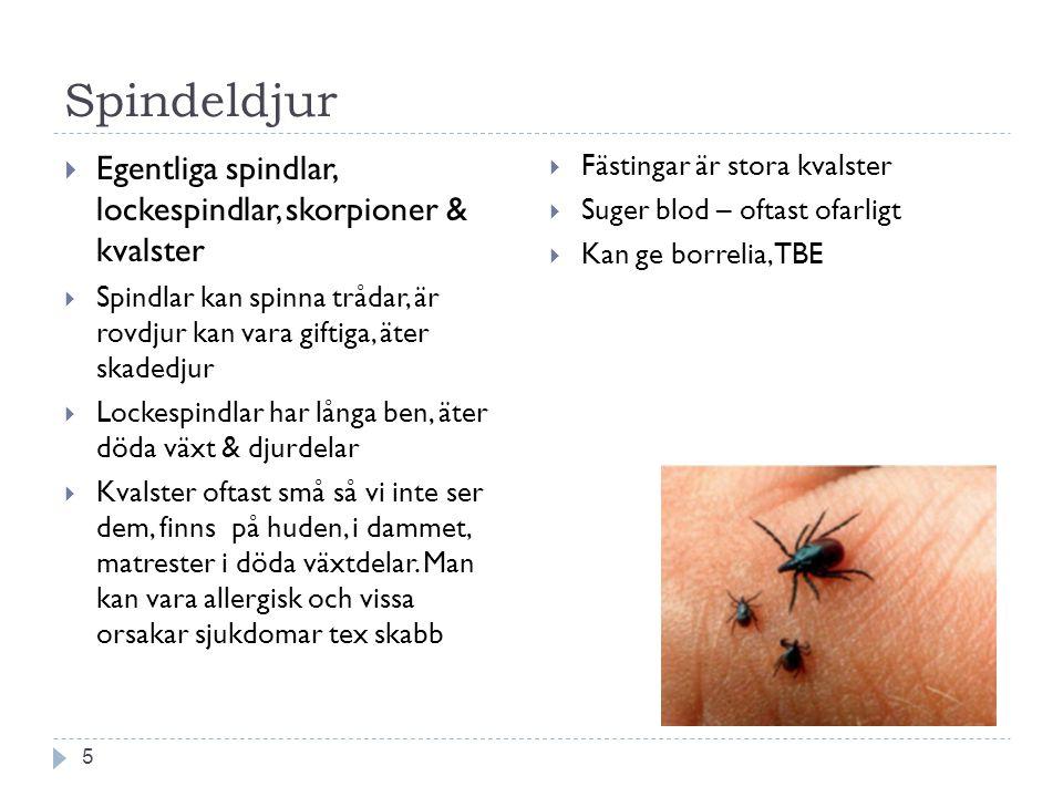 Spindeldjur Egentliga spindlar, lockespindlar, skorpioner & kvalster