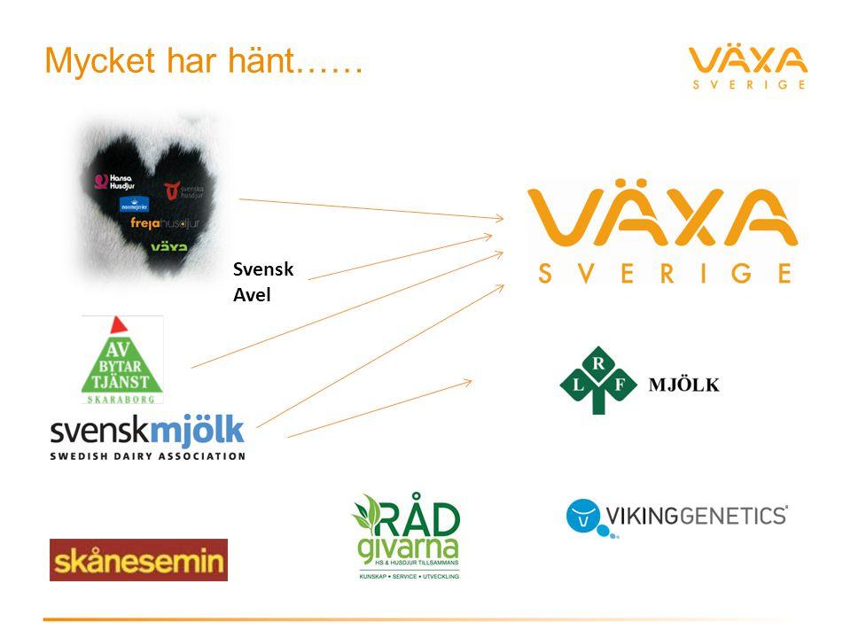 Mycket har hänt…… Svensk Avel