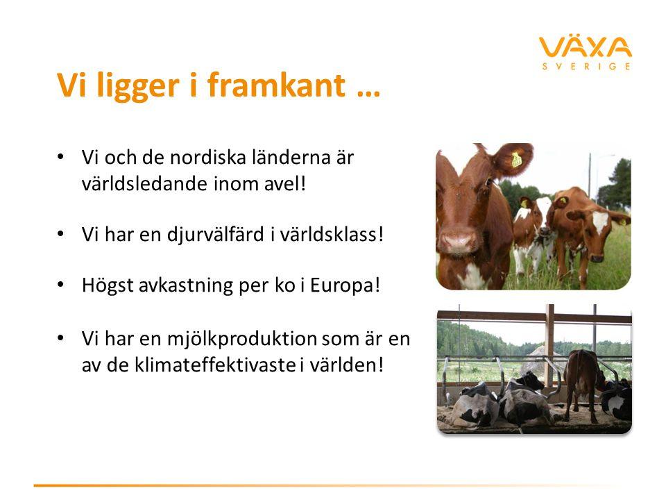 Vi ligger i framkant … Vi och de nordiska länderna är världsledande inom avel! Vi har en djurvälfärd i världsklass!