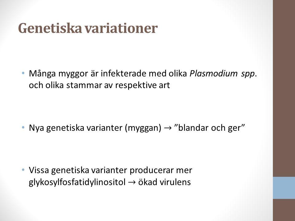 Genetiska variationer