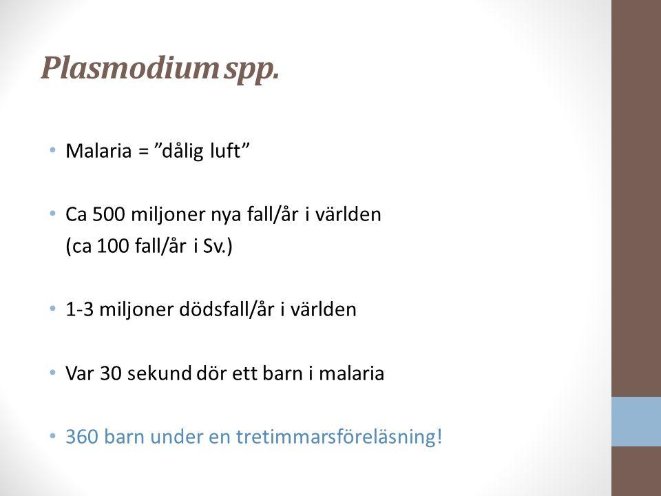 Plasmodium spp. Malaria = dålig luft
