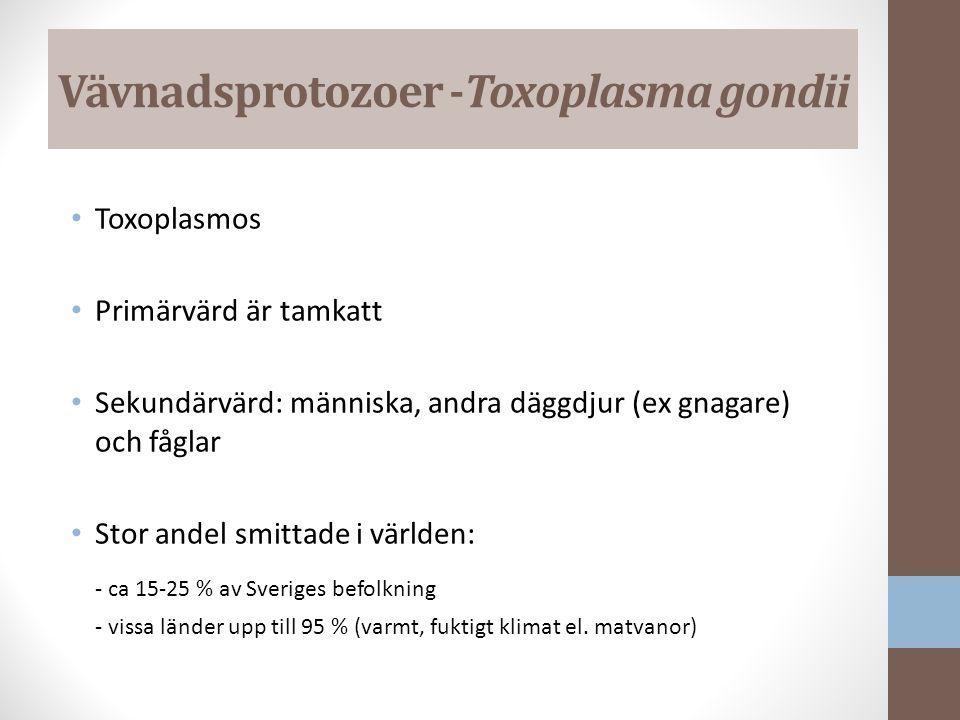 Vävnadsprotozoer -Toxoplasma gondii