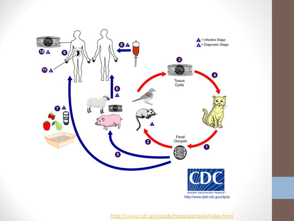 http://www.cdc.gov/dpdx/toxoplasmosis/index.html