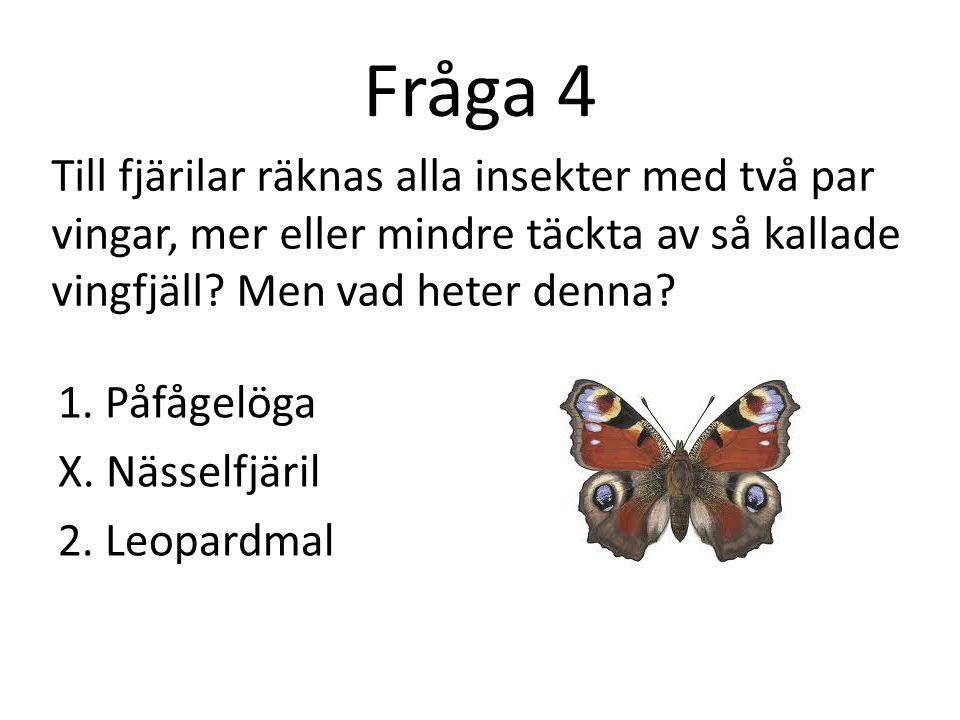 Fråga 4 Till fjärilar räknas alla insekter med två par vingar, mer eller mindre täckta av så kallade vingfjäll Men vad heter denna