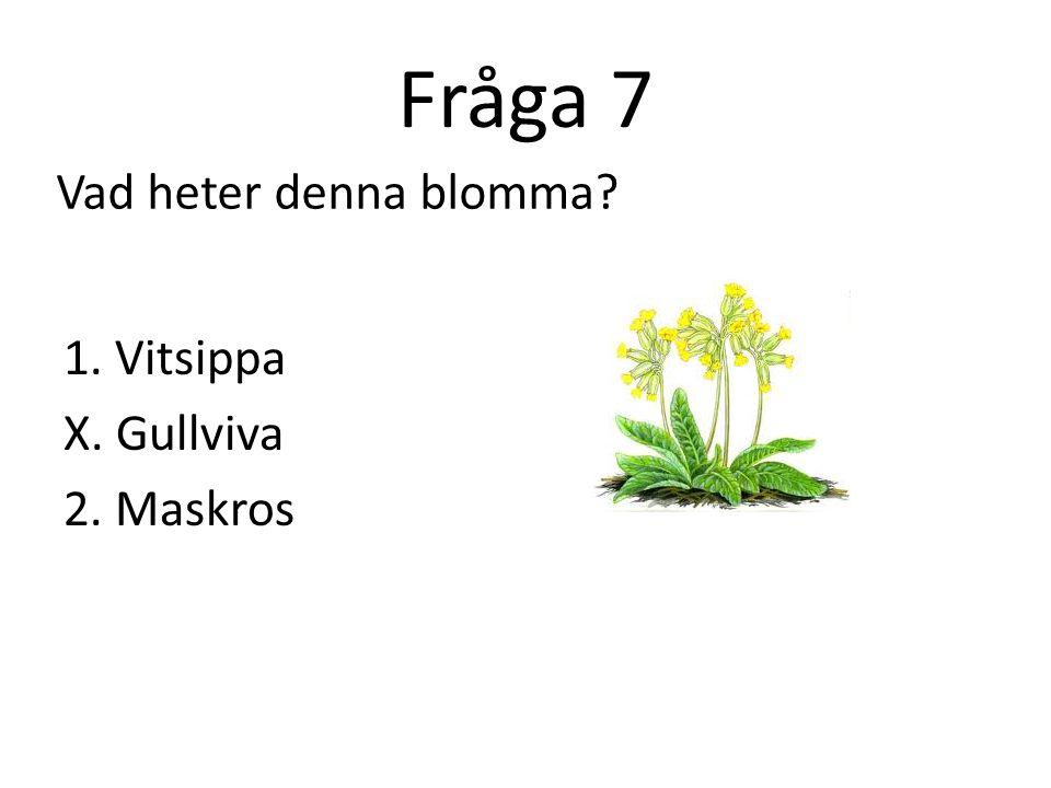 Fråga 7 Vad heter denna blomma 1. Vitsippa X. Gullviva 2. Maskros