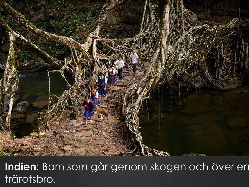 Indien: Barn som går genom skogen och över en trärotsbro.