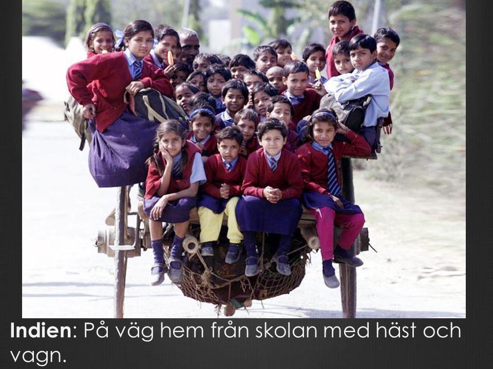 Indien: På väg hem från skolan med häst och vagn.