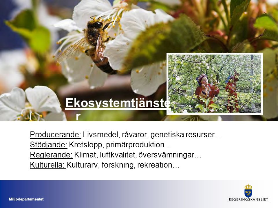 Ekosystemtjänster Producerande: Livsmedel, råvaror, genetiska resurser… Stödjande: Kretslopp, primärproduktion…