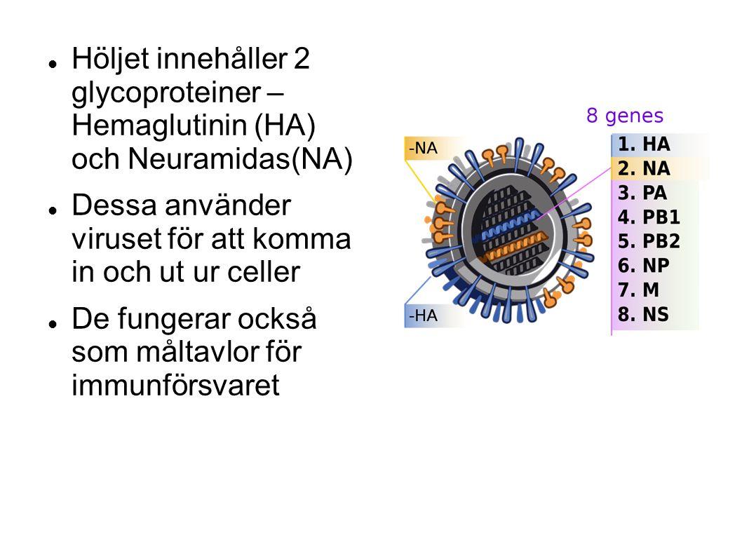 Höljet innehåller 2 glycoproteiner – Hemaglutinin (HA) och Neuramidas(NA)