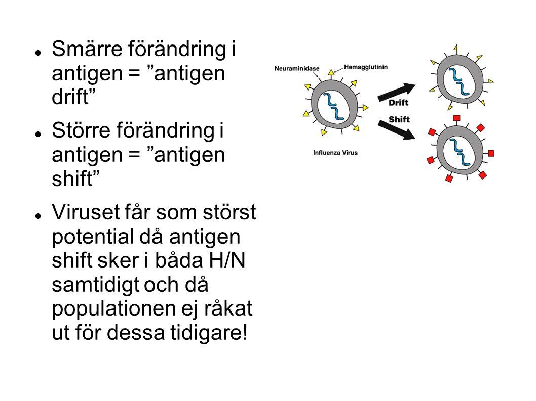 Smärre förändring i antigen = antigen drift