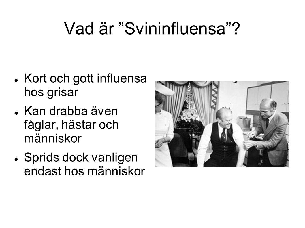 Vad är Svininfluensa