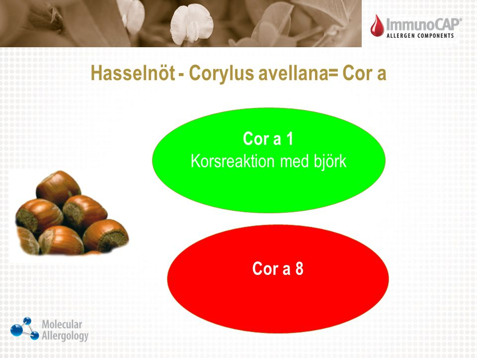 Hasselnöt - Corylus avellana= Cor a