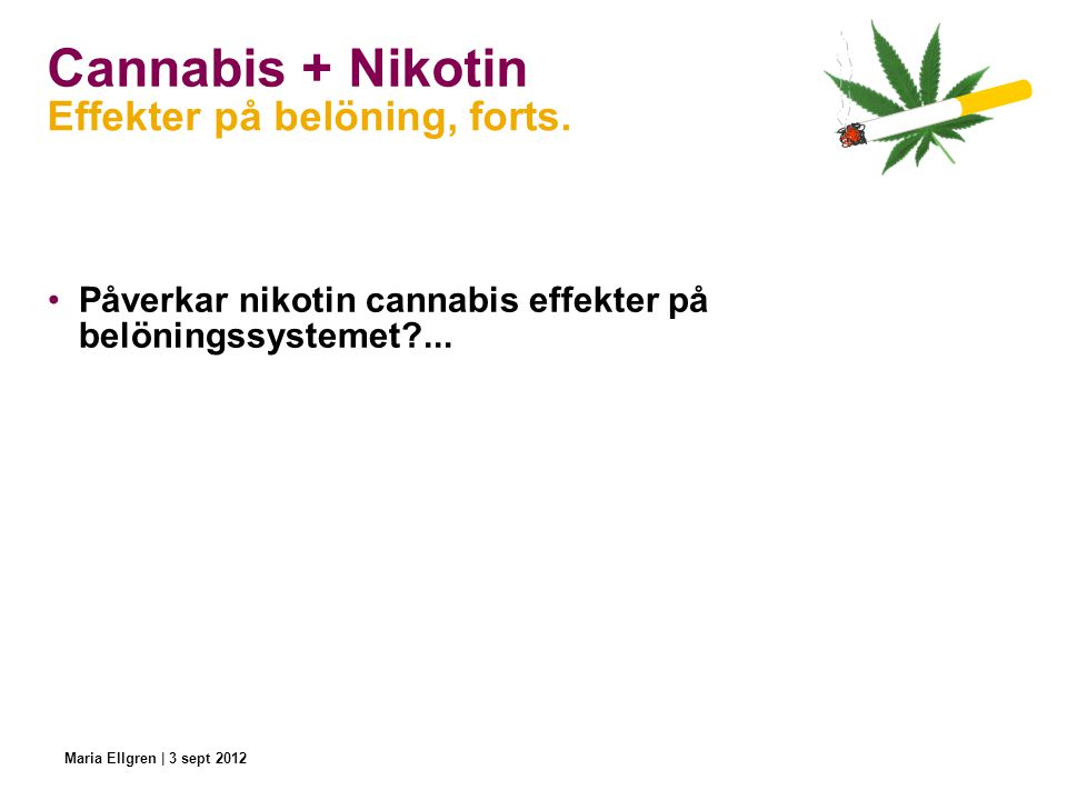 Cannabis + Nikotin Effekter på belöning, forts.