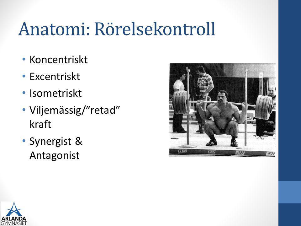Anatomi: Rörelsekontroll