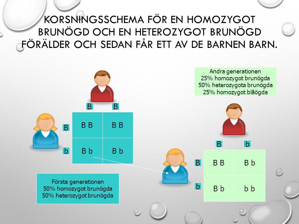 Korsningsschema för en homozygot brunögd och en heterozygot brunögd förälder och sedan får ett av de barnen barn.