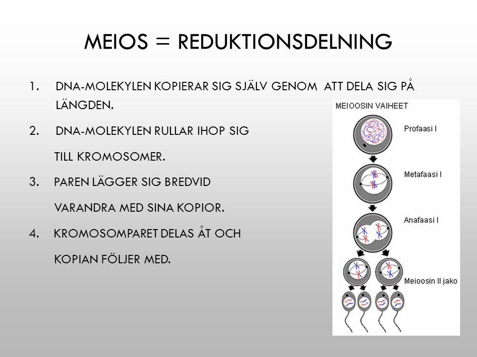 Meios = reduktionsdelning