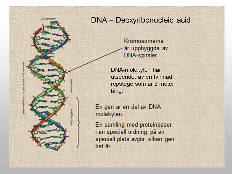 DNA = Deoxyribonucleic acid