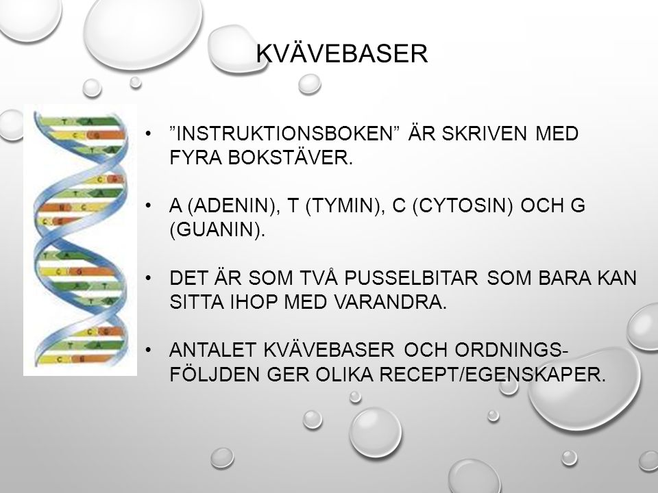 KVÄVEBASER Instruktionsboken är skriven med fyra bokstäver.
