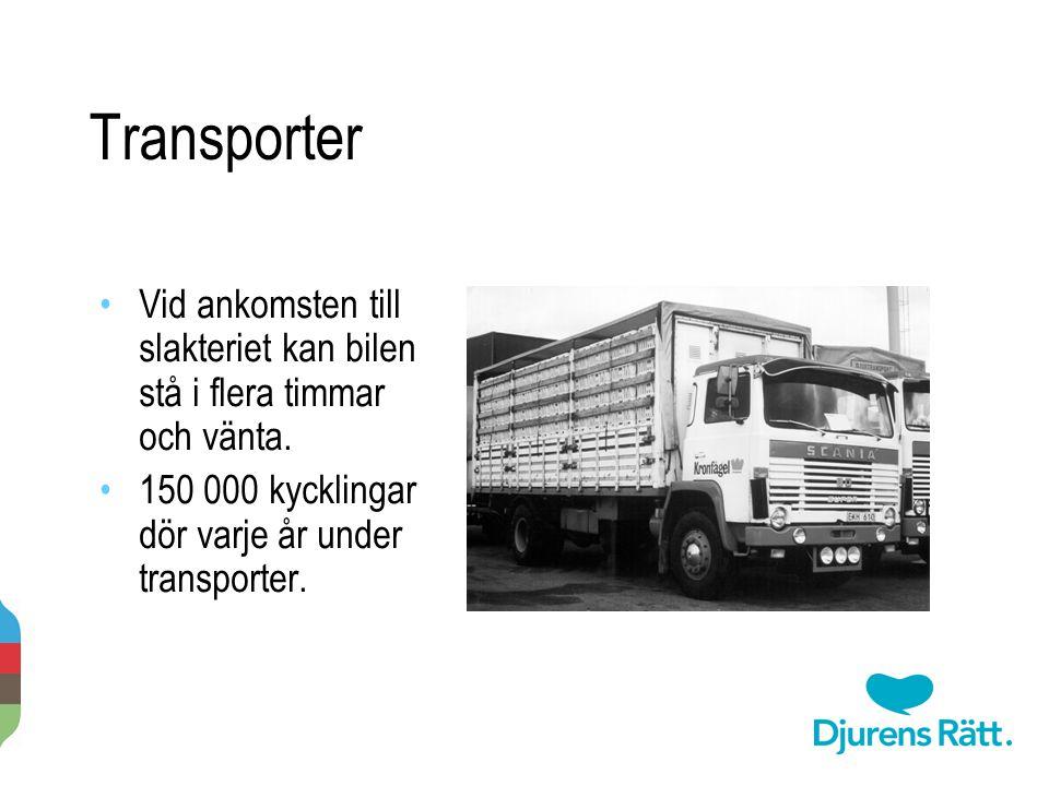 Transporter Vid ankomsten till slakteriet kan bilen stå i flera timmar och vänta. 150 000 kycklingar dör varje år under transporter.