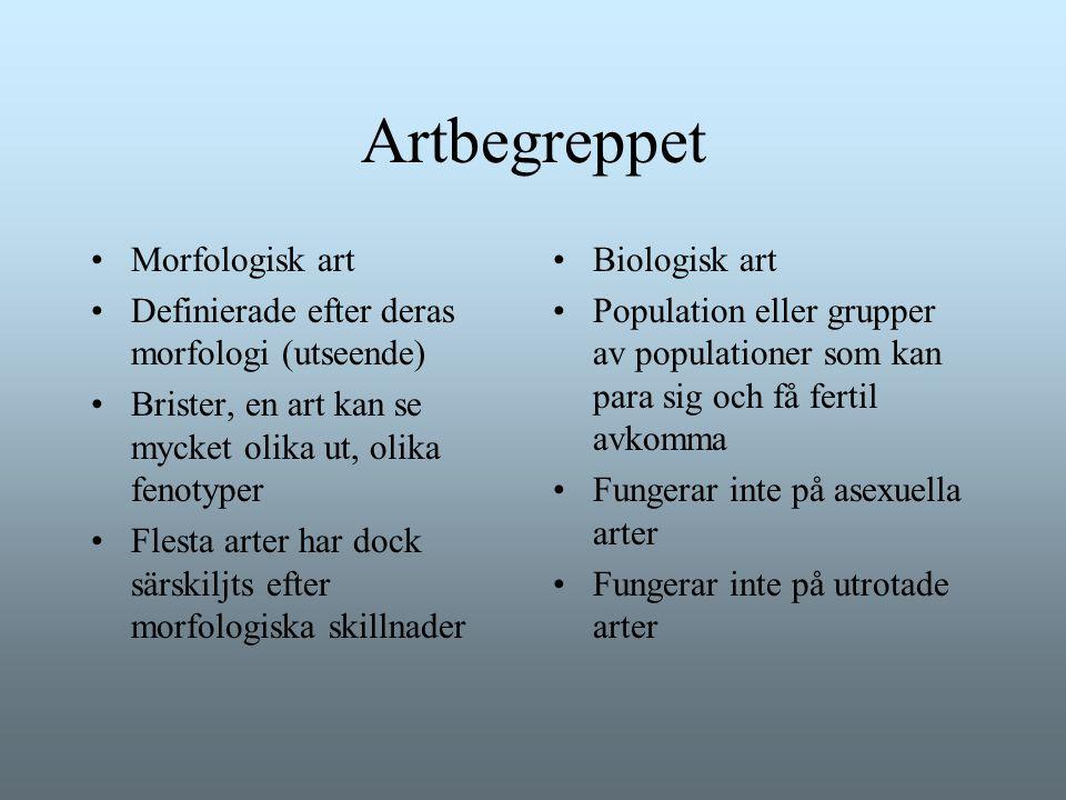 Artbegreppet Morfologisk art