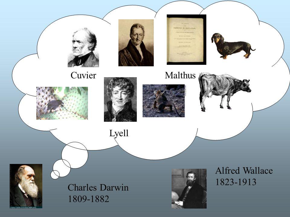 Idéhistoria Cuvier Malthus Lyell Alfred Wallace 1823-1913