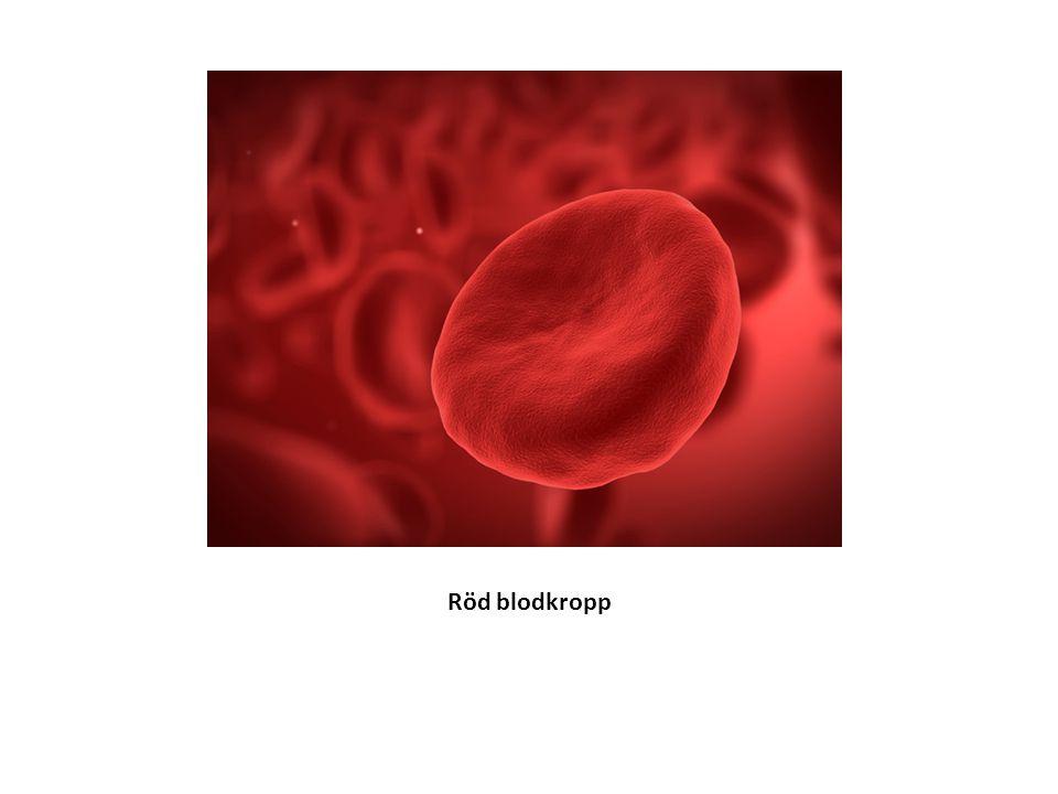 Röd blodkropp