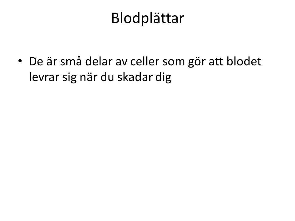 Blodplättar De är små delar av celler som gör att blodet levrar sig när du skadar dig