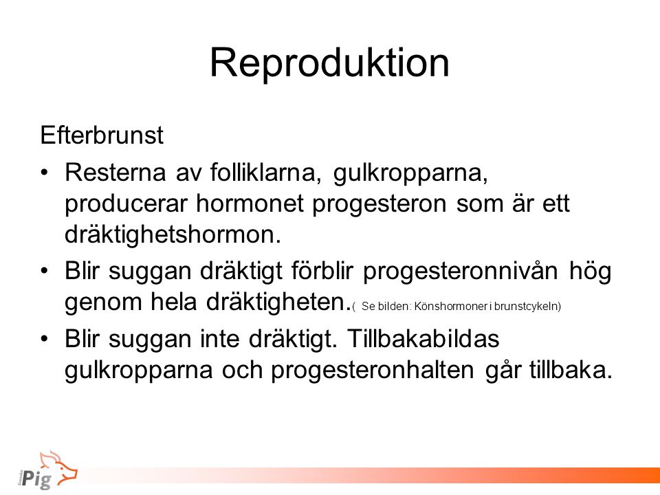 Reproduktion Efterbrunst