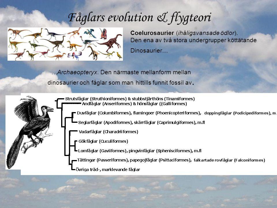 Fåglars evolution & flygteori