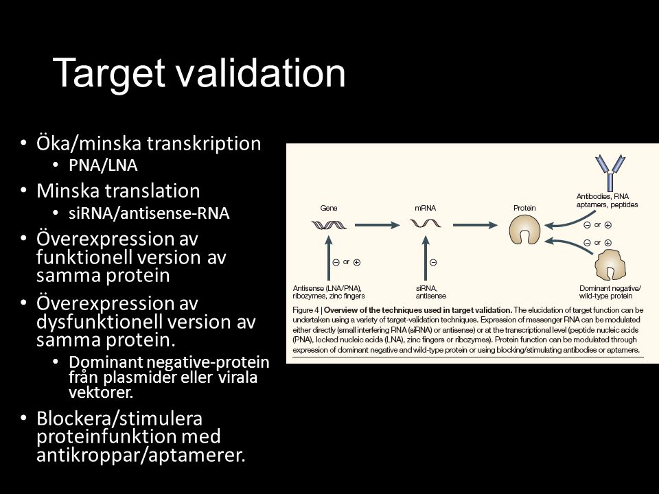 Target validation Öka/minska transkription Minska translation