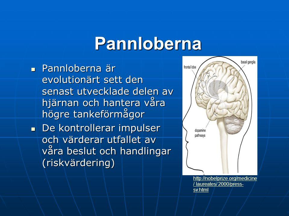 Pannloberna Pannloberna är evolutionärt sett den senast utvecklade delen av hjärnan och hantera våra högre tankeförmågor.