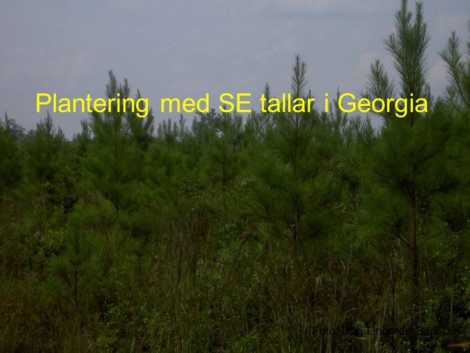 Plantering med SE tallar i Georgia