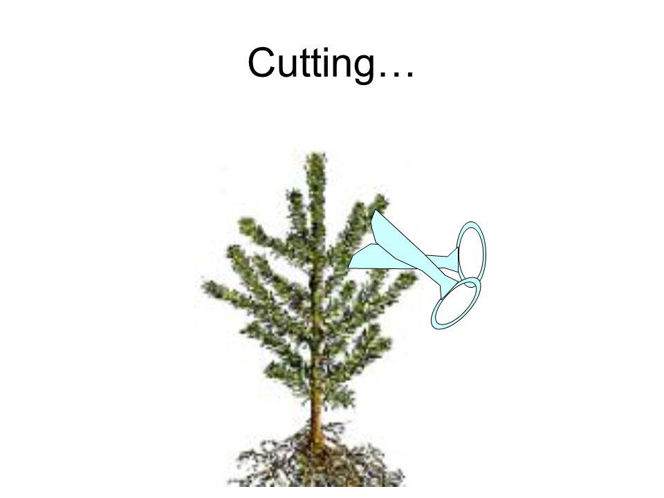 Cutting…