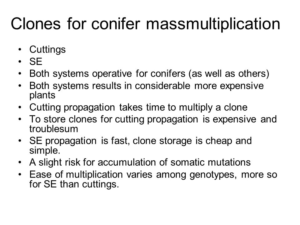 Clones for conifer massmultiplication