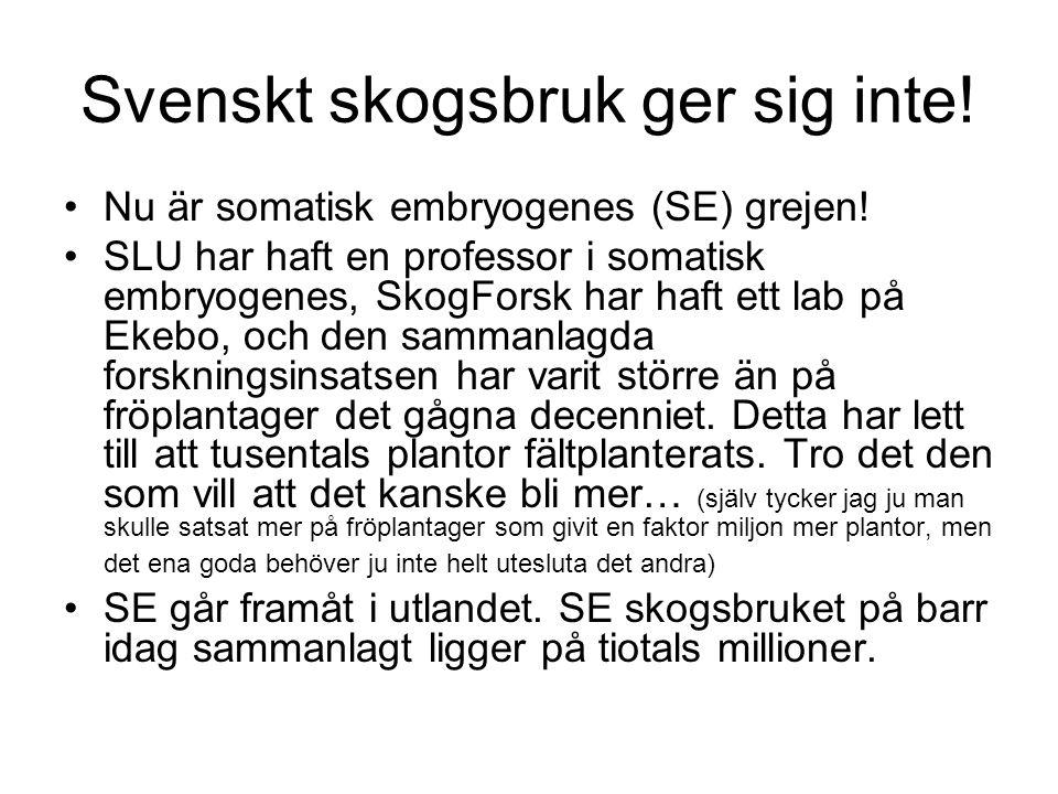 Svenskt skogsbruk ger sig inte!