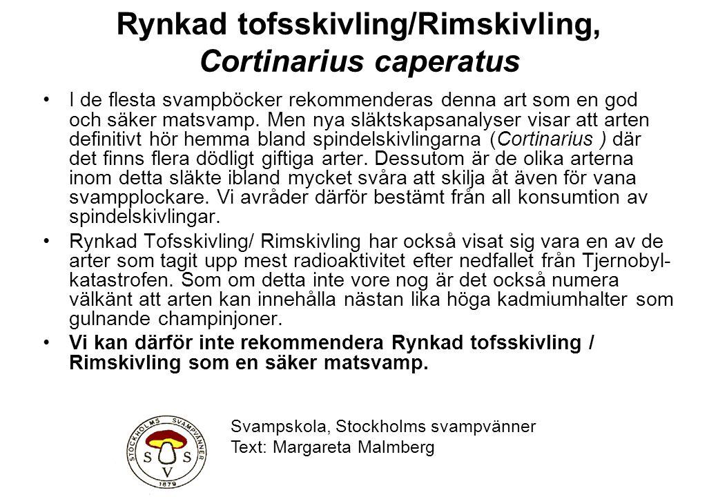 Rynkad tofsskivling/Rimskivling, Cortinarius caperatus