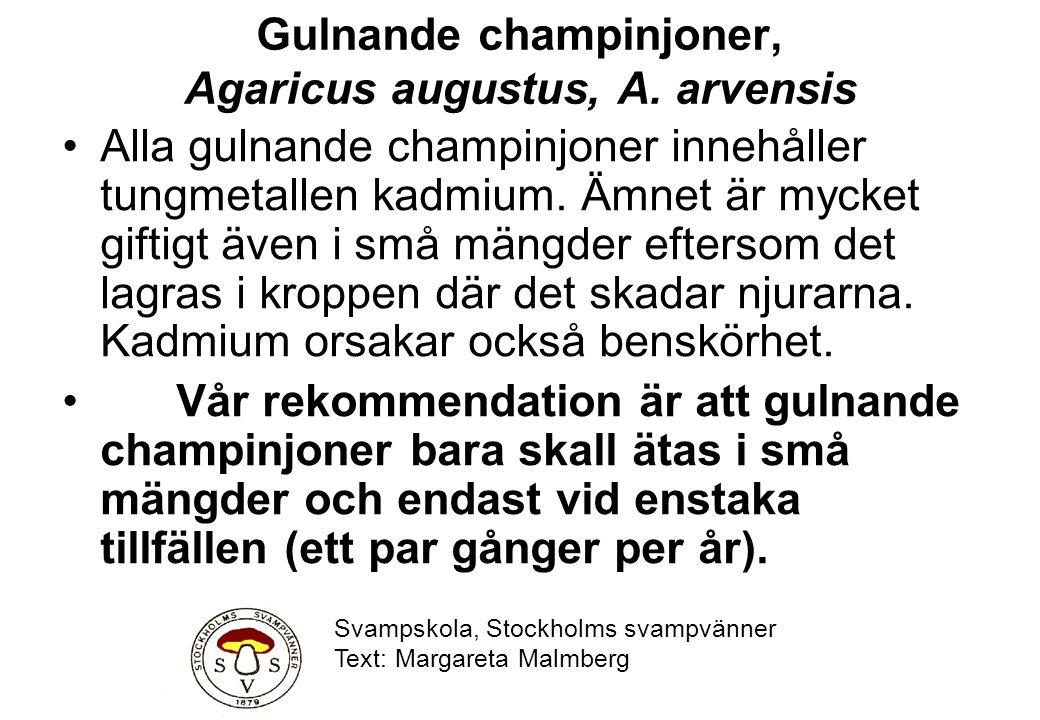 Gulnande champinjoner, Agaricus augustus, A. arvensis