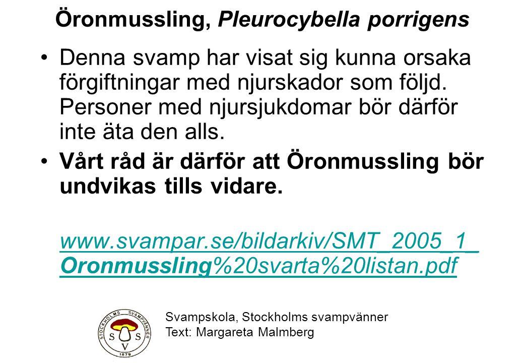 Öronmussling, Pleurocybella porrigens