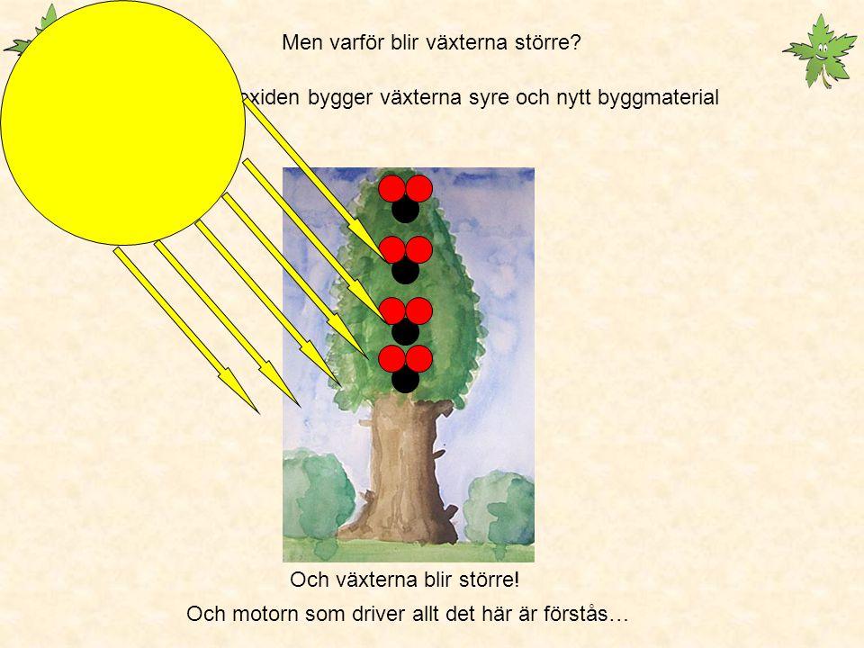 Men varför blir växterna större
