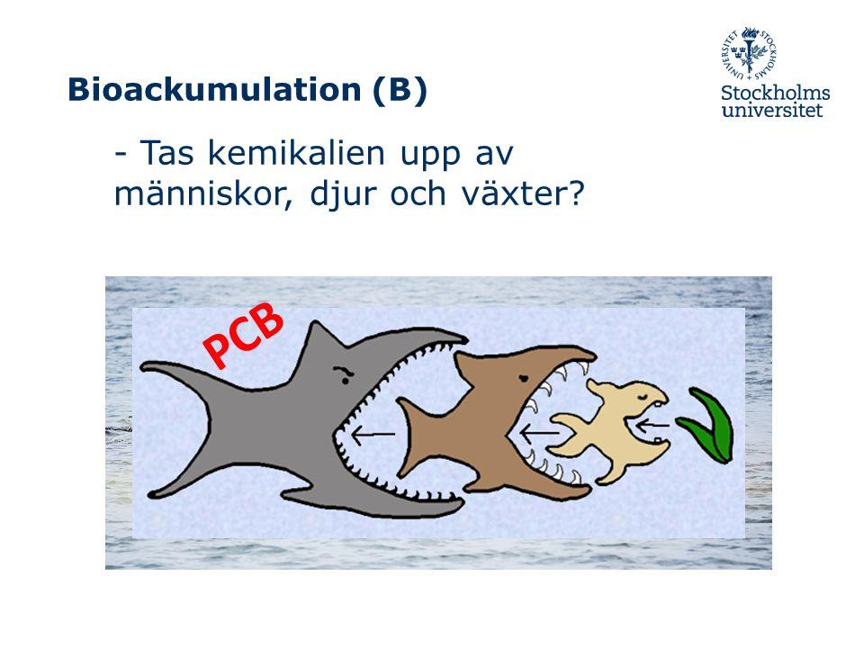 PCB PCB - Tas kemikalien upp av människor, djur och växter