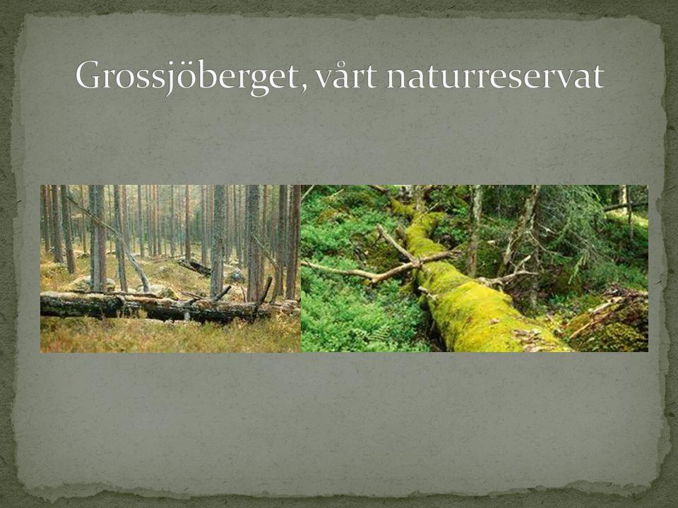 Grossjöberget, vårt naturreservat