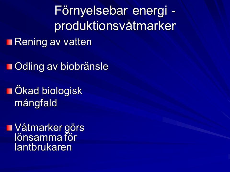 Förnyelsebar energi - produktionsvåtmarker