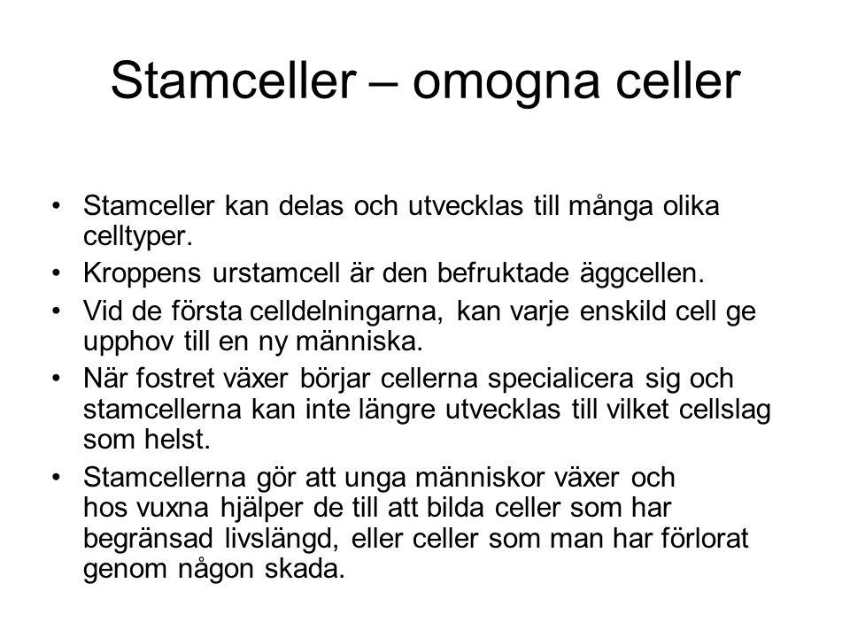 Stamceller – omogna celler