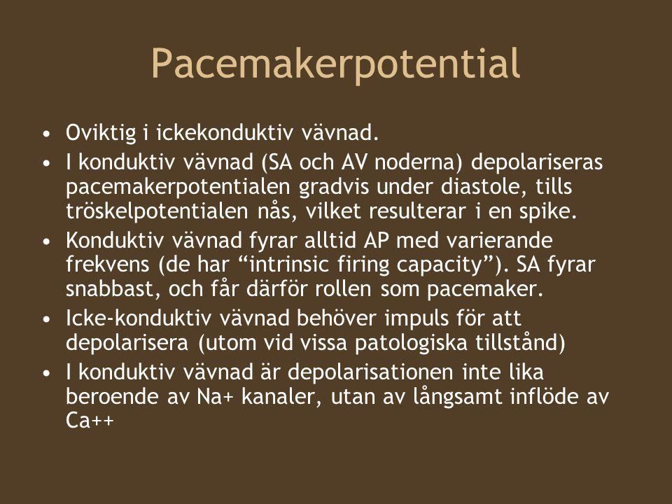 Pacemakerpotential Oviktig i ickekonduktiv vävnad.