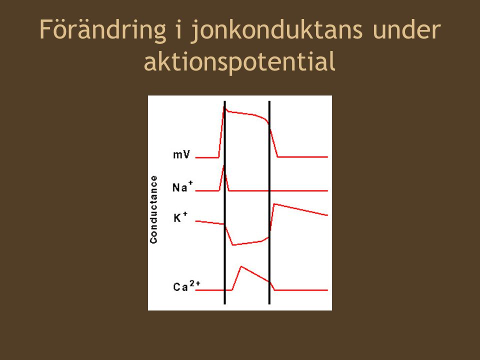 Förändring i jonkonduktans under aktionspotential