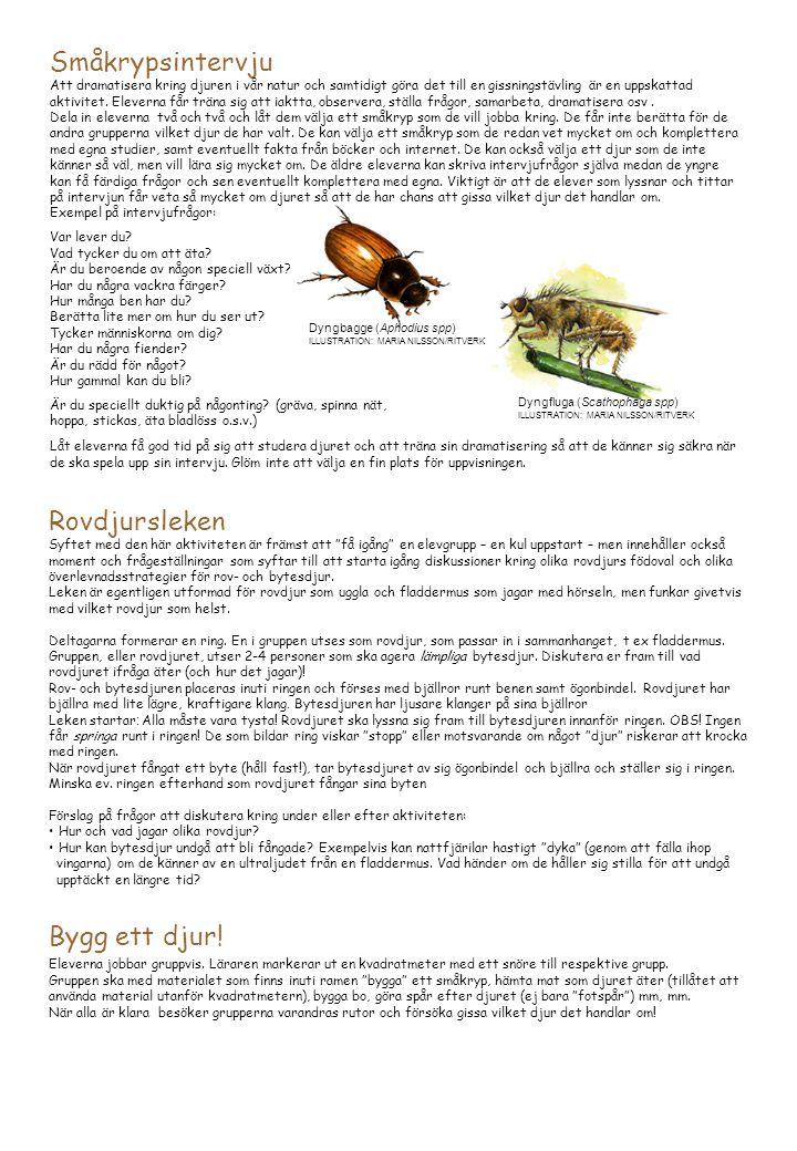 Småkrypsintervju Rovdjursleken Bygg ett djur!